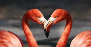 Flamingos als Herz