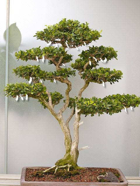 hochzeitsgeschenk bonsai baum die besten momente der hochzeit 2017 foto blog. Black Bedroom Furniture Sets. Home Design Ideas